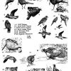 Birds 18 Photo