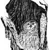 Barrow Owl Photo