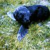 Fur Seal Pup Photo