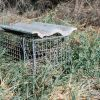 Mongoose Trap Photo