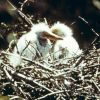 Maybe wood stork chicks. Photo