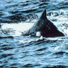 Whale. Photo