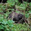 Porcupine. Photo