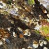 Closeup of Aleutian tidepool with anemones, limpets, and barnacles Photo