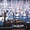 Fishing boats and more fishing boats Photo