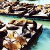 Sea lions lollygagging in the sun near Fisherman's Wharf. Photo