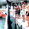 Bringing up 14-foot, 1200 pound tiger shark for weighing. Photo