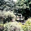 A garden on the grounds of a Lima cathedral. Photo