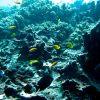 Reef scene with anthias and damselfish Photo