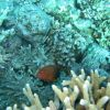 Unidentified red fish Photo