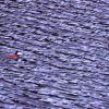 Rudy duck on Floating Island Lake Photo