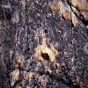 Close-up of Woodpecker holes in a tree Photo
