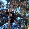 Black bear in a tree Photo