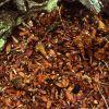 Red squirrel pine cone midden Photo