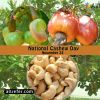 Happy National Cashew Day - 23 November Photo